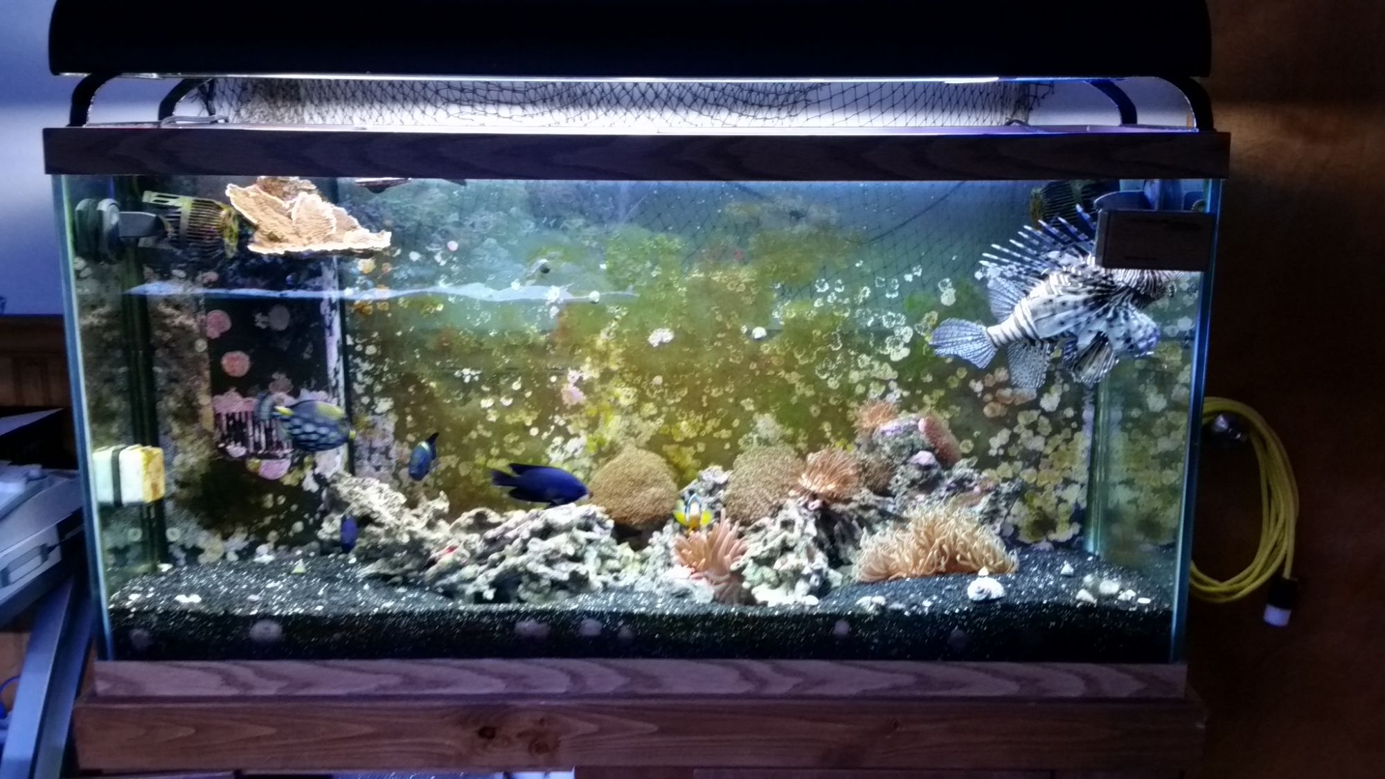 Saltwater fish for 90 gallon my 90 gallon reef tank for Google fish tank mrdoob